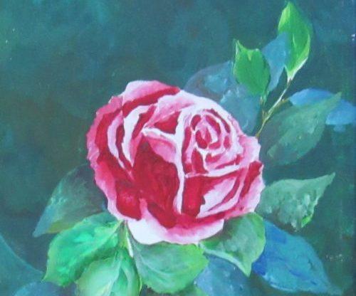 peaceful rose